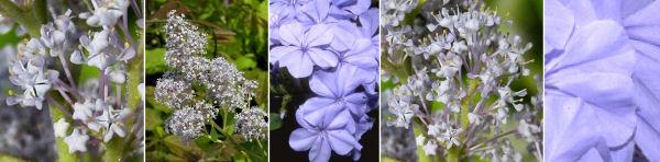 Dryades Azulejos.jpg
