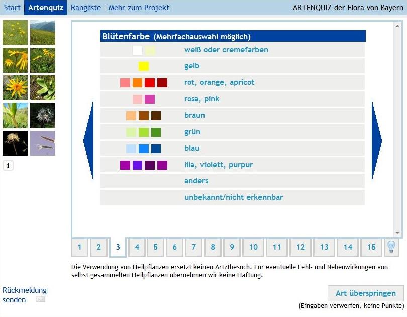 Describing the flower colour in the species quiz Flora of Bavaria