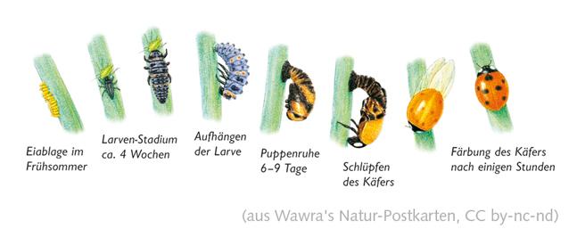 Wawra's Naturpostkarten 19-3.jpg