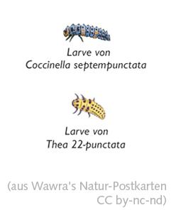 Wawra's Naturpostkarten 19-5.jpg