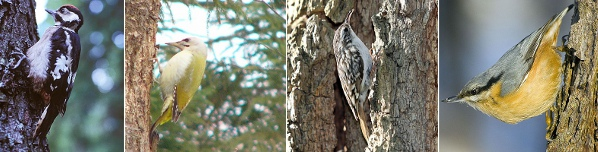 Tree climbing birds.jpg