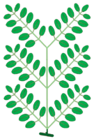 Leaf morphology type bipinnately-compound.png