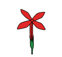 Flower morphology perianth type cruciate.png