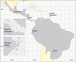 Figure 2. Map of Central and South America, showing the combined distribution range of species formerly ascribed to Sturnira lilium (gray tone) and the type localities (stars) of species in the Sturnira lilium complex. The localities where Sturnira burtonlimi (top inset) and Sturnira bakeri (bottom inset) occur are also shown; type localities are represented by a star and paratypes with circles. Note that Sturnira burtonlimi and Sturnira luisi occur in sympatry.