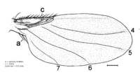 Mstenoterga 220 wing.png