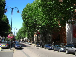 Plane trees in the centre of London