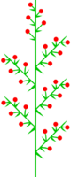 Doppeltraube 2 (inflorescence).png