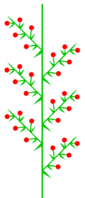 Doppeltraube (inflorescence).png