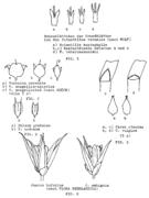 Abb. 2-8 (mehrere Artikel, 1200 dpi, SW)