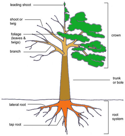 Tree structure JR Press 1.jpg