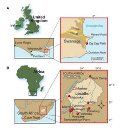 Figure 1. Heterodontosaurid localities. A Locality (red dot) for Echinodon becklesii on the southern coast of England B Heterodontosaurid localities in South Africa and Lesotho. Locality(ies)/taxon identification: Nosi/Abrictosaurus consors; Mlamli, Tushielaw, Tyinindini/Heterodontosaurus tucki; Bamboeskloof Farm, Buck Camp, Paballong/Lycorhinus angustidens; Maboloka/Heterodontosauridae incertae sedis; Voyizane/ Pegomastax africanus gen. n. sp. n.