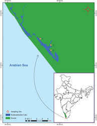 "Figure 1. Map showing the positions of the collection localities of Namalycastis jaya sp. n. in Kerala , India. Site 1, Kadinamkulam estuary (8°37'33.34""N, 76°48'7.827""E); Site 2, Murukkumpuzha retting zone (8°36'57.473""N, 76°49'8.914""E); and Site 3, Kadinamkulam estuary (8°36'27.21""N, 76°49'9.474""E)."
