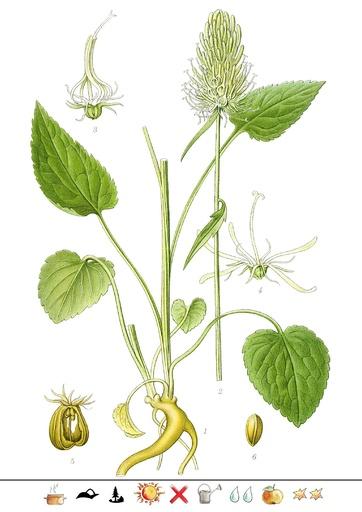 Ährige Teufelskralle (Pflanzentafel Natura Miriquidica e.V.).pdf