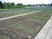 Frisch gepflanzt sieht der Garten noch recht kahl aus. (Bild: JKI)