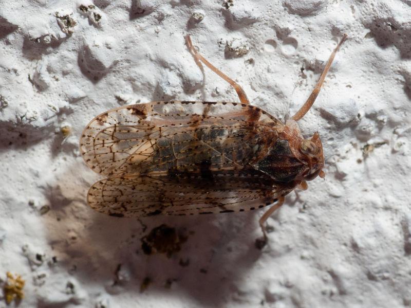 Datei:2010-06-19-Insecto en Soigrexa Bastavales c.jpg