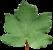 Acer pseudoplatanus Blatt-SRothbauer.png