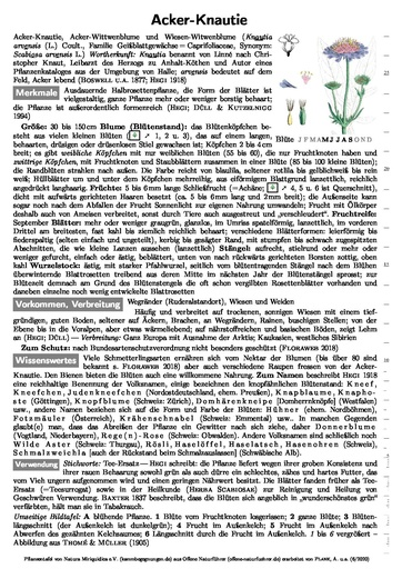 Acker-Knautie (Pflanzentafel Natura Miriquidica e.V.).pdf