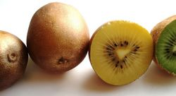 alt=Description de l'image Actinidia chinensis - cultivar 'Hort16A' with yellow flesh.jpg.
