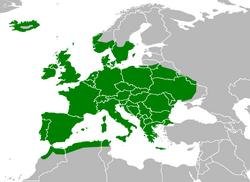 Verbreitung der Waldmaus (Apodemus sylvaticus) - Toter alter Mann, CC-BY-SA 3.0