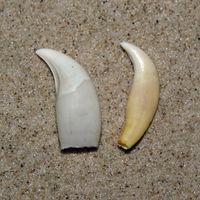 Bananenförmig gekrümmt, spitz