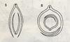 Bestimmungsschlüssel der wichtigsten Gräser SH (E.-W. Raabe) Abb. 05 und 06.png