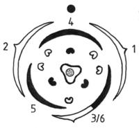 Blütendiagramm Polygonum (Rolf Wißkirchen).png
