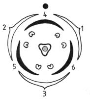 Blütendiagramm Rumex (Rolf Wißkirchen).png