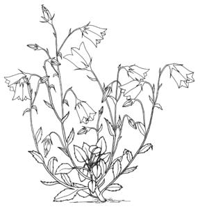 Blume-Natur.png
