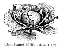 Chou Joanet hâtif Vilmorin-Andrieux 1904.png