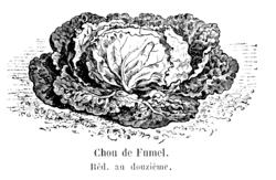 Chou de Fumel Vilmorin-Andrieux 1904.png