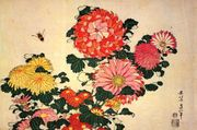 Chrysanthemum grandiflorum.jpg