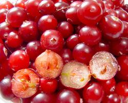 alt=Description de l'image Cranberries.jpg.
