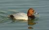 Duck WUXGA.jpg