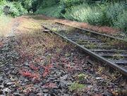 An Bahndämmen kann das Ruprechtskraut in großen Mengen auftreten. (Bild. W. Wohlers, JKI)