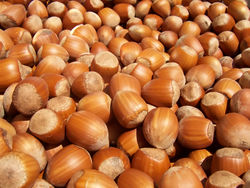 alt=Description de l'image Hazelnuts.jpg.