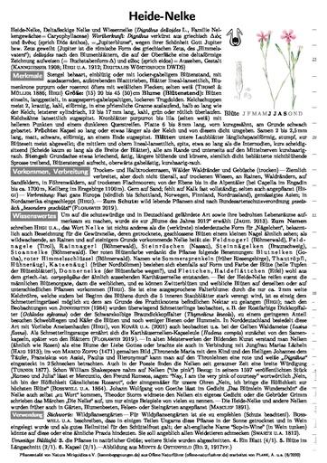 Heide-Nelke (Pflanzentafel Natura Miriquidica e.V.).pdf