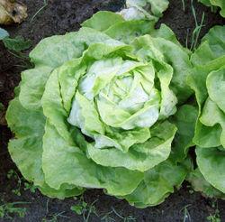 alt=Description de l'image Kropsla herfst.jpg.