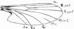 Flügel aus Bezzi (1913)