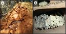 Macrotermes natalensis SciRep 2013.png