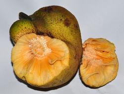 alt=Description de l'image Monkey Jack (Artocarpus lakoocha) 4.jpg.
