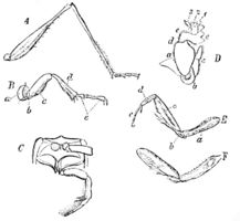 PSM V39 D244 Various insect legs.jpg