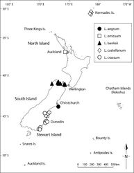 Figure 15. Distribution of Lepidium aegrum, Lepidium amissum, Lepidium castellanum (Kermadec Islands only), Lepidium banksii, and Lepidium crassum.