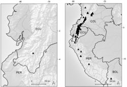 Figure 6. Distribution map of Xenophyllum acerosum (left hand) and X. humile (right hand).