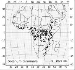 Figure 26. Distribution of Solanum terminale Forssk.