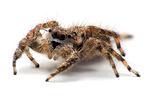 Spinnentiere haben 8 Laufbeine