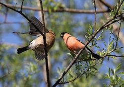 Männchen mit Jungtier - spacebirdy, CC BY-SA 3.0
