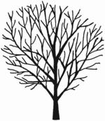 Salix caprea Habitus (Brigitte Hennig).png