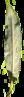 Blattunterseite der Bruch-Weide, grau-grün