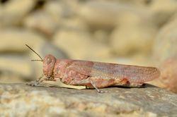Weibchen - Gilles San Martin, CC BY-SA 2.0