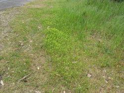 Kleiner Klee: Standort– Harry Rose, CC BY-SA 2.0